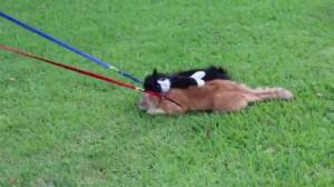 Simon Refuses To Dog