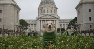 San Francisco Dog Mayor