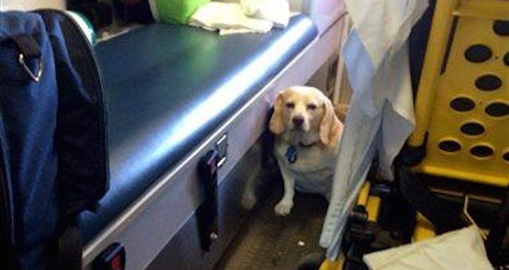 Ambulance Ride Dog