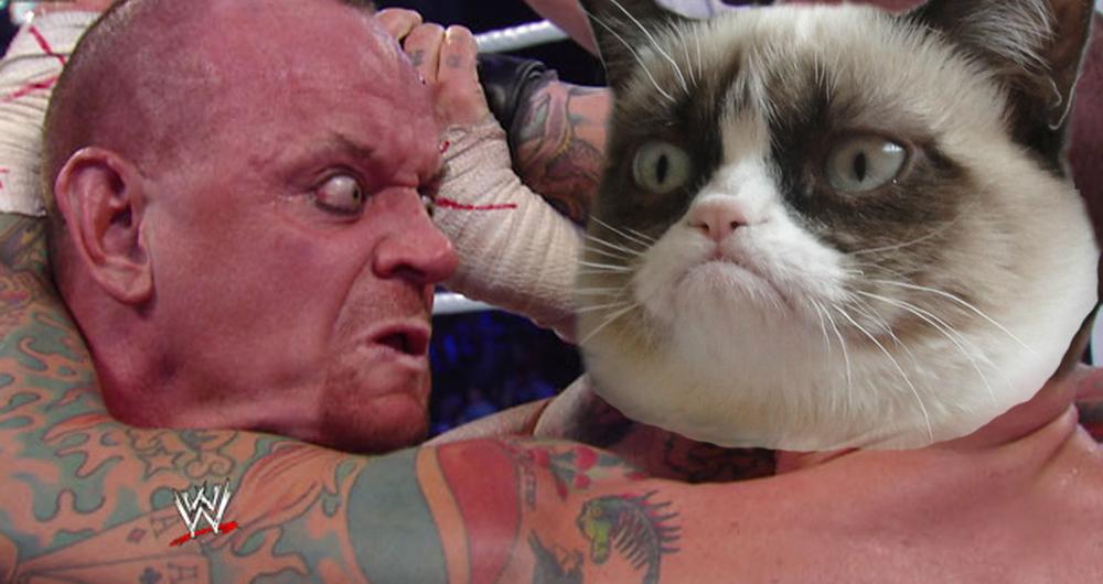 grumpy catttt