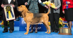 nathan the bloodhound