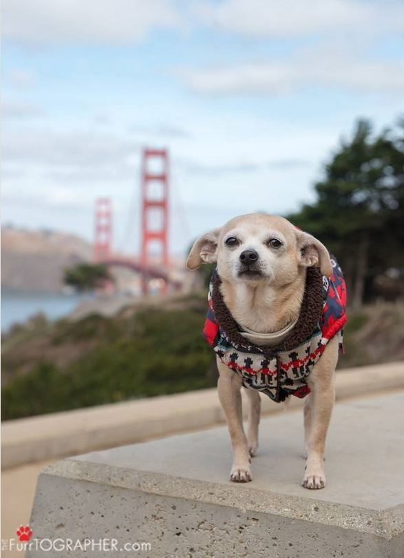 san fran dog mayor 3