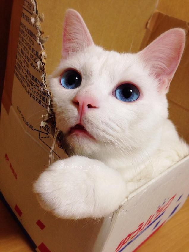 adorable cat 1