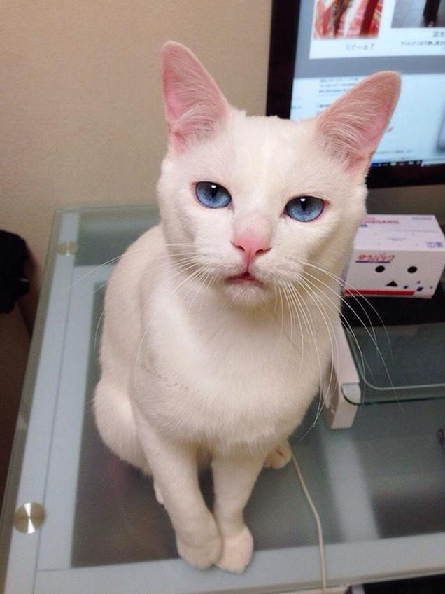 adorable cat 2