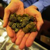 marijuana header