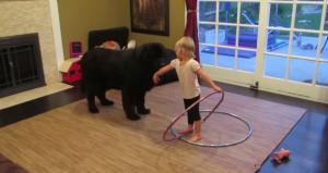 dog hula hoop