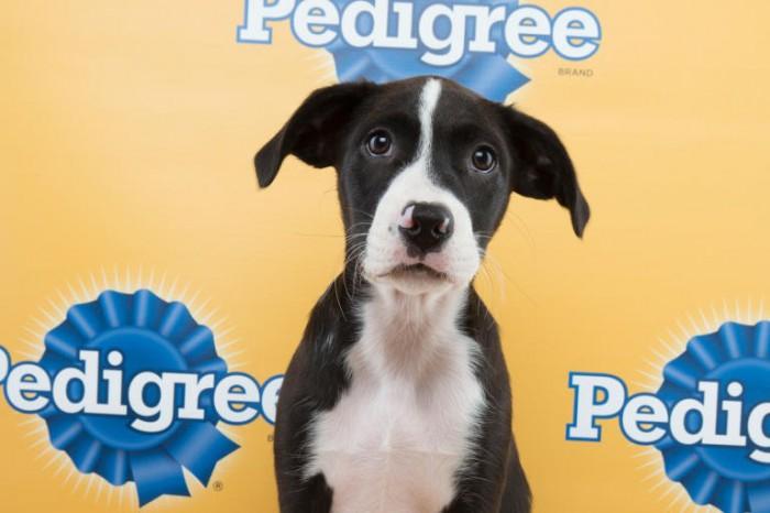 freckles puppy bowl hound mix
