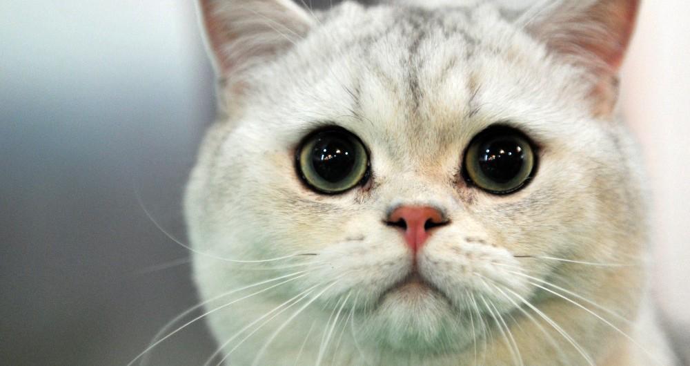 KYRGYZSTAN-CATS-FEATURE