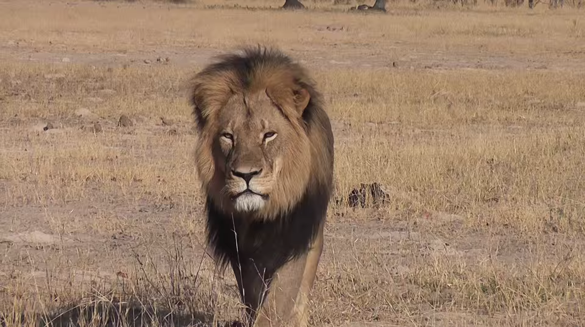 cecil the lion end image