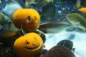 aquarium pumpkin header