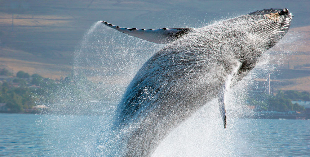 whalebeerjumping