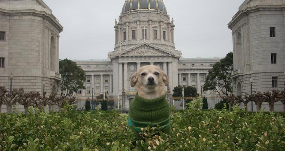 San Francisco Dog Mayor