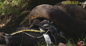 discovery anaconda