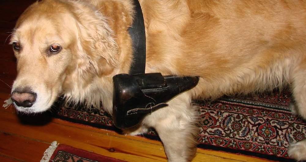 dog with sidearm