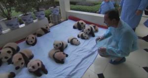 baby panda header