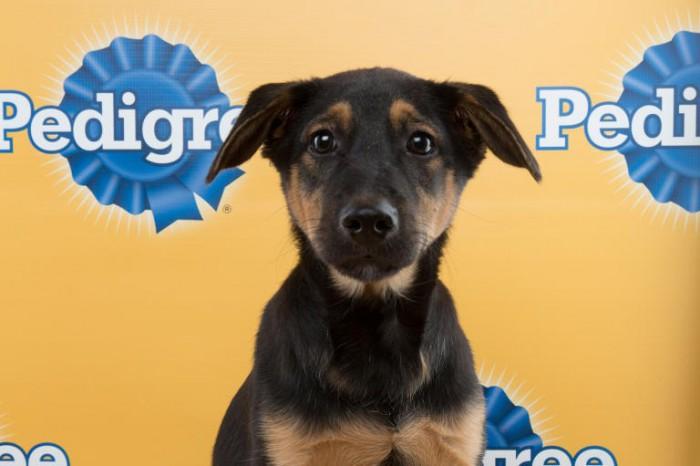 lance puppy bowl terrier mix