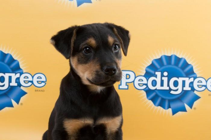 mr fantastic puppy bowl terrier mix