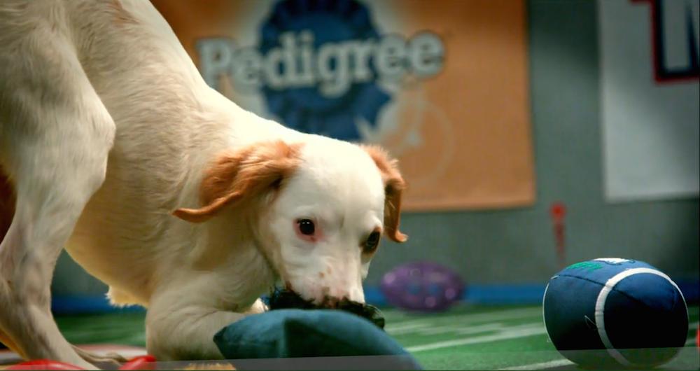 puppy bowl header