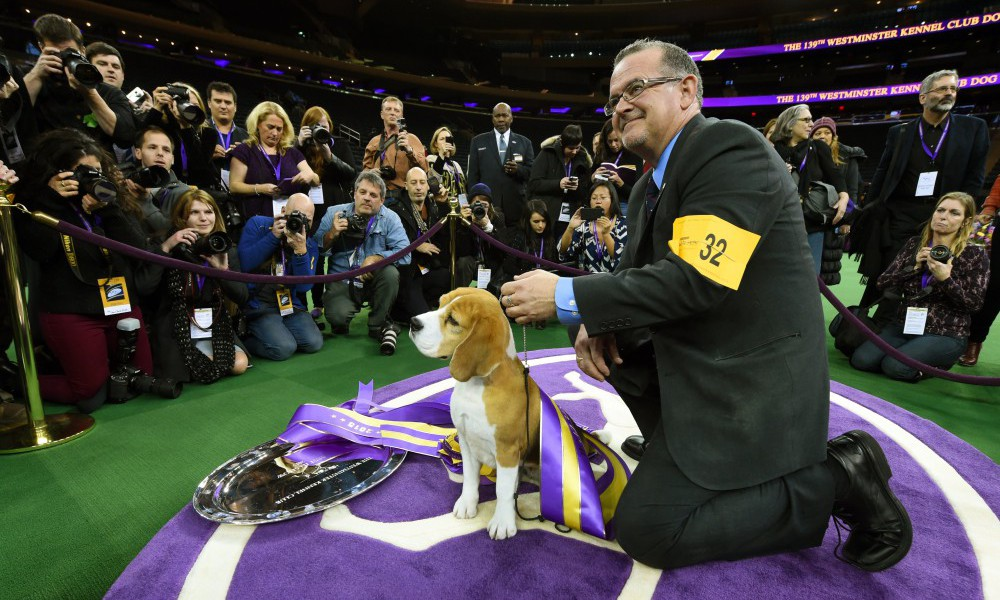 US-WESTMINSTER DOG SHOW