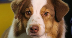 vivian dog