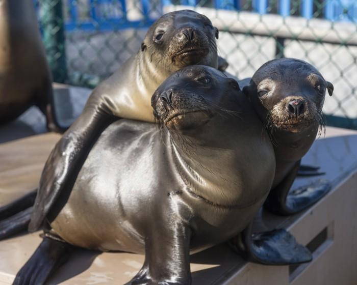 sea world sea lions