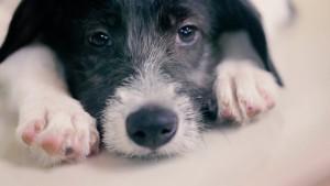 Quatro Patinhas NGO presents: Priceless Pets