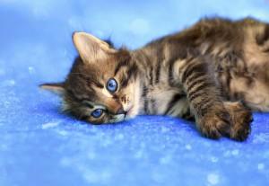 lonely-cat